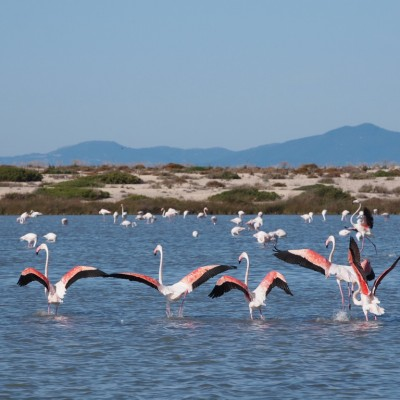 Розовите фламинги - Северно Йонийско море