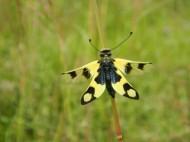 Пеперуда 2