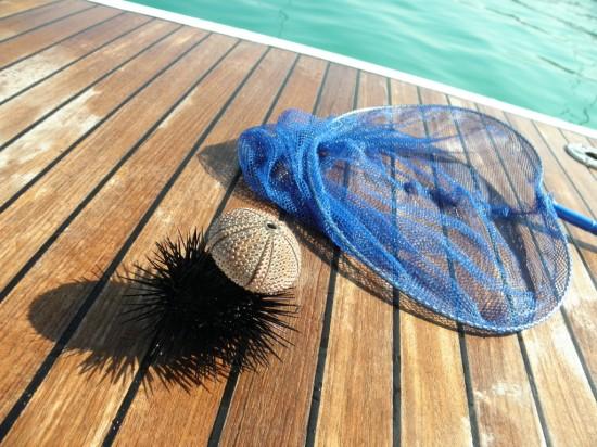 Морски предмети-морски таралеж