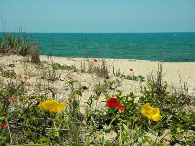 Синеморец - плаж