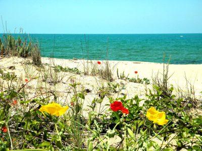 Синеморец - плаж - дюна - мак